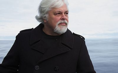 Sea Shepherd's Paul Watson: A Conversation in Earth Island Journal