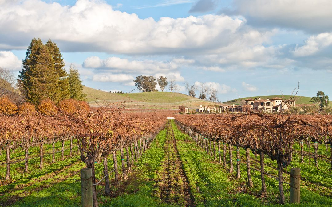 NY Times: Vineyards with Vistas