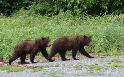 Kayaking to see bears at Alaska's Pack Creek, Alaska magazine, Aug. 2015