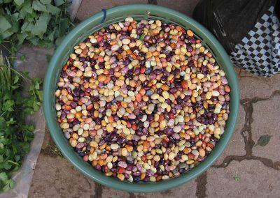 Guat-beans_hi-res