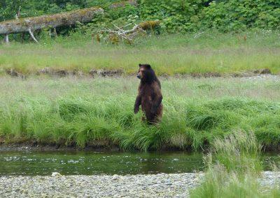 bear-high
