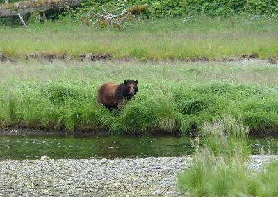 bear-low